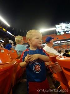 Cubs Baseball Fan