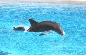 """Siegfried & Roy's Secret Garden and Dolphin Habitat"" ""Mirage Casino and Hotel"" ""Las Vegas"" ""Local Las Vegas"" ""Bottlenose Dolphin"""
