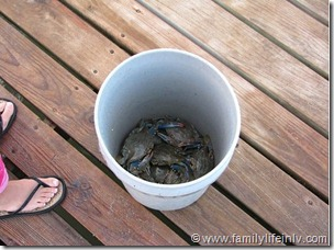 Blue Shell Crab