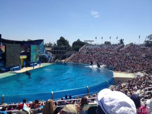 Shamu, Shamu Whale, Killer Whale, SeaWorld San Diego, SeaWorld, SeaWorld Family Vacation, SeaWorld San Diego, San Diego Vacation