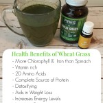 Health Benefits of Wheat Grass + Gingerbread Smoothie Recipe
